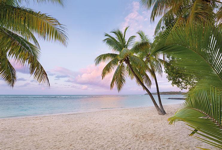 Fototapeet XXL4-528 Paradise Morning