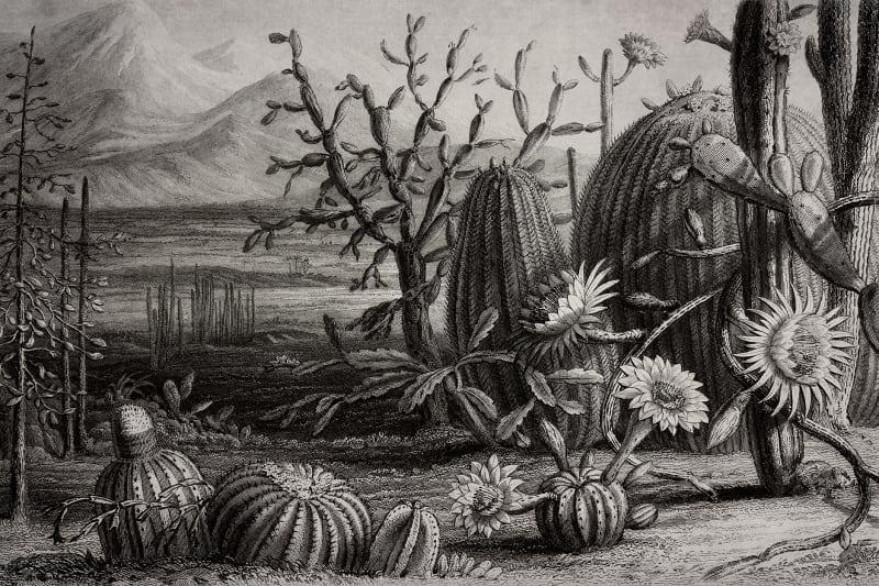 Pilttapeet R15741 - Cactus Garden