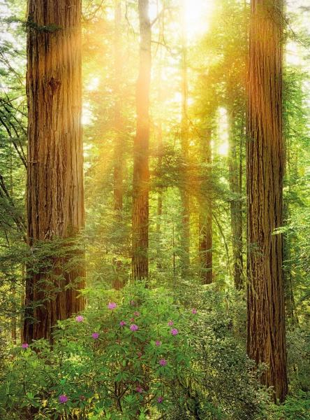 Pilttapeet Redwood SH019-VD2 (200×250 cm)