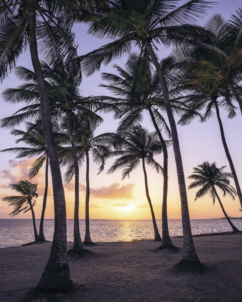Pilttapeet Palmtrees on Beach SH022-VD2 (200×250 cm)