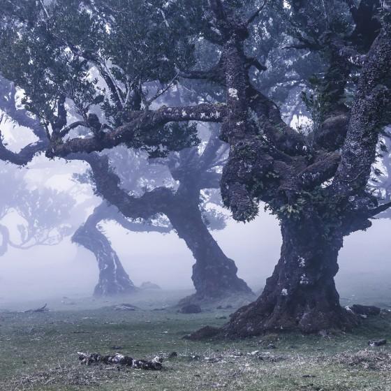 Fototapeet Stefan Hefele - Ghost Line SH052-VD4