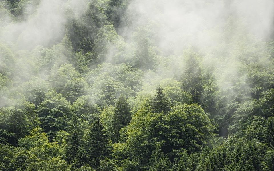 Pilttapeet Forest Land SH061-VD4 (400×250 cm)