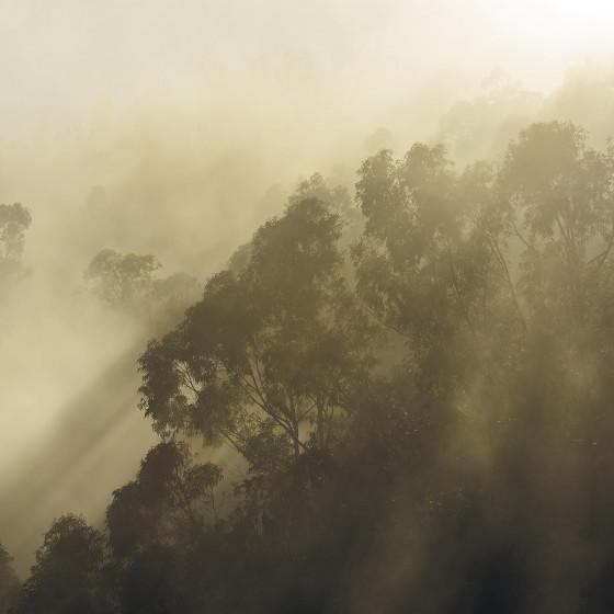 Fototapeet Stefan Hefele - Misty Mountain SH067-VD4