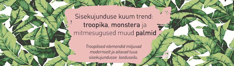 Sisekujundustrend: troopika, monstera, palmilehed