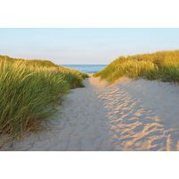 Fototapeet 8-995 Sandy Path