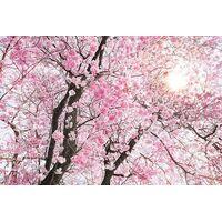Fototapeet X8-046 Bloom, 400×260 cm