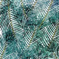 Fototapeet Palm Canopy P025-VD2