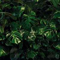 Fototapeet Tropical Wall P333-VD4