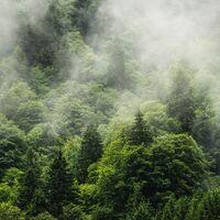 Fototapeet Forest Land PSH061-VD4