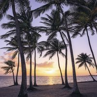 Fototapeet Stefan Hefele - Palmtrees on Beach SH022-VD2
