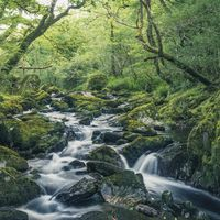 Fototapeet Stefan Hefele - Green Tales SH056-VD4