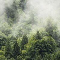 Fototapeet Stefan Hefele - Forest Land SH061-VD4