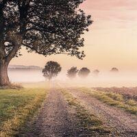 Fototapeet Stefan Hefele - Misty Morning SH068-VD4
